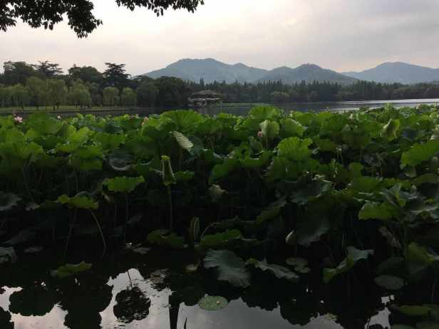 WeChat Image_20181012164242